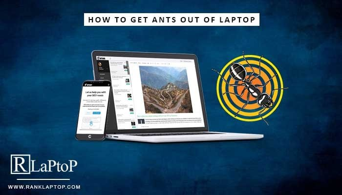 How to Get Ants Out of Laptop